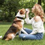 Como adestrar o seu cachorro, com um adestrador para cachorro