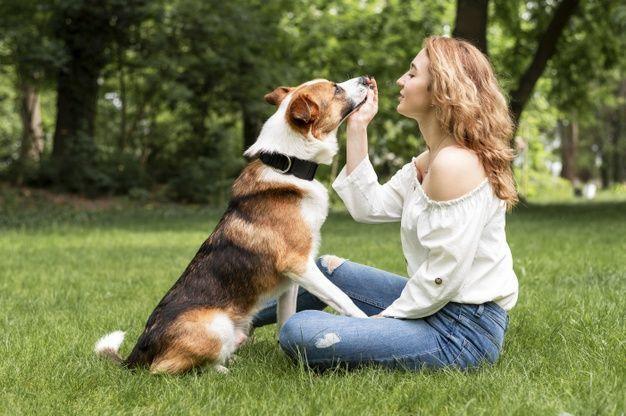 como-adestrar-o-seu-cachorro